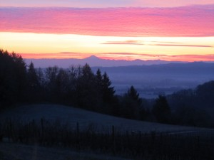 Sunrise in Oregon Wine Country 1
