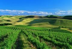 Walla Walla Wineries 1