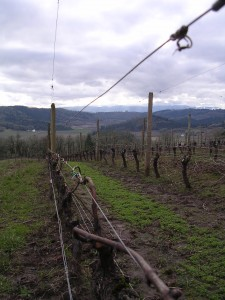Winter Wine Tasting in Oregon's Willamette Valley 1