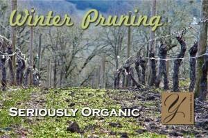 Winter Pruning 1