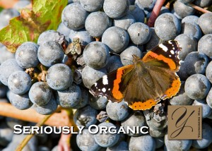 Balance of indigenous wildlife = a thriving vineyard 1