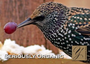 Seriously Organic Vineyard Birds (Part 2 of 2) 1