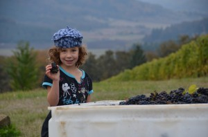 Harvest 2013 205