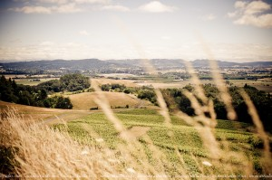 Holistic vineyard
