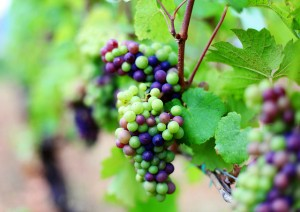 Sustainable Wine Practices for Earth Day