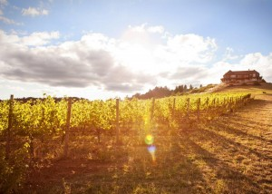Pinot Noir in the Willamette Valley