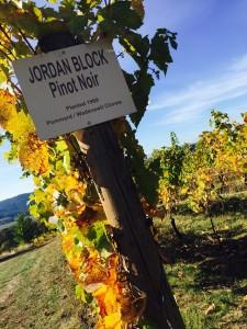 Fall vineard