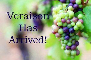 Veraison blog