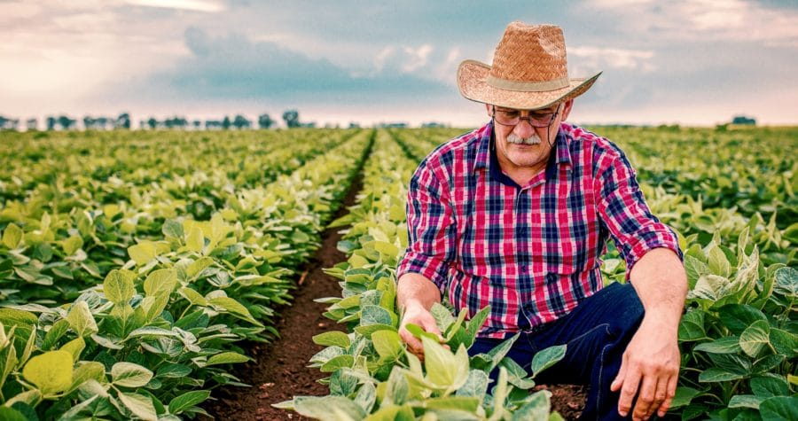 Willamette Valley farms