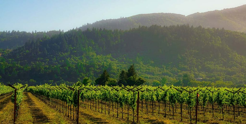 An Women sampling Oregon Pinot Noir Winery
