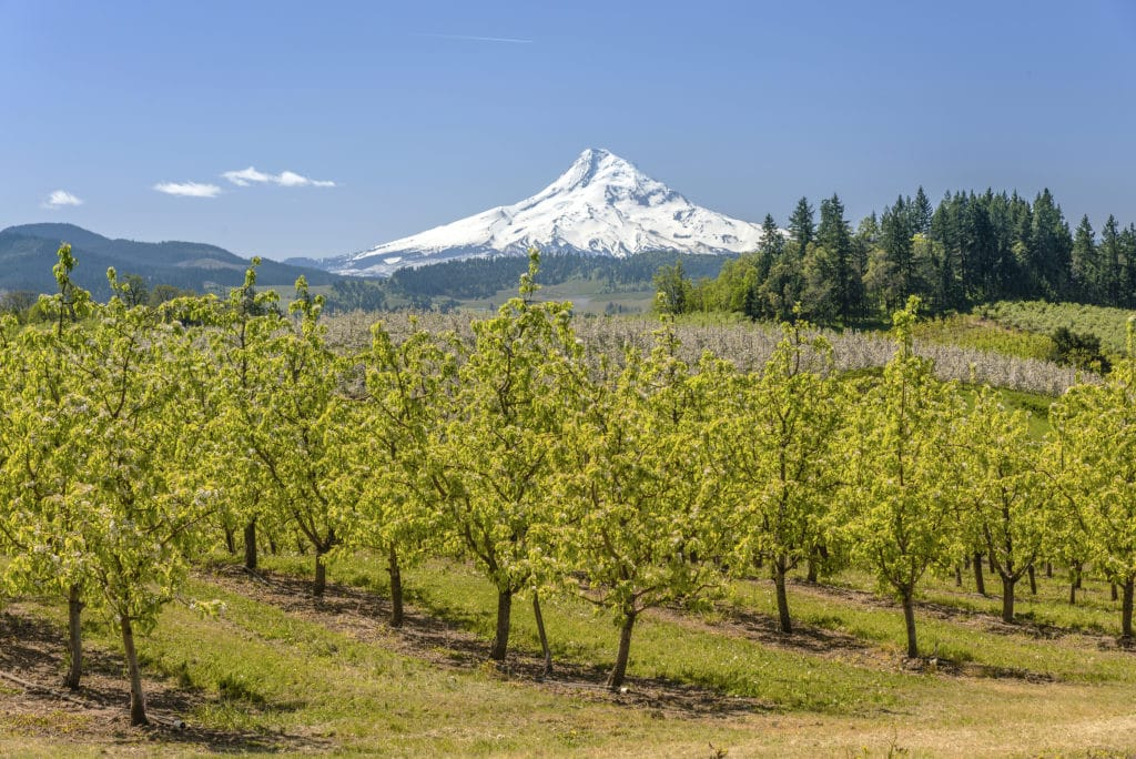 Oregon Scenic Drives to Take This Fall