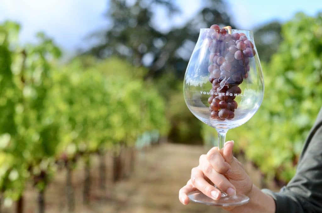 At our Willamette Valley Bed and Breakfast, you'll dribk wine made from grapes grown on the vines outside your window.